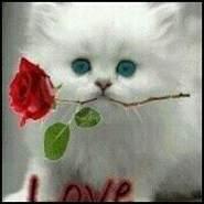 gatonormal's profile photo