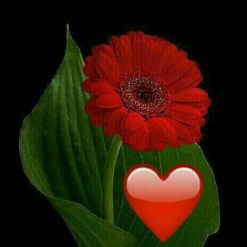 user815125374_Al Farwaniyah_Svobodný(á)_Muž
