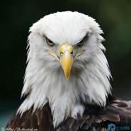 raafatmrh's profile photo