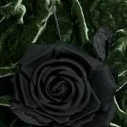 nicelife81's profile photo