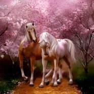 hassan83_1983's profile photo