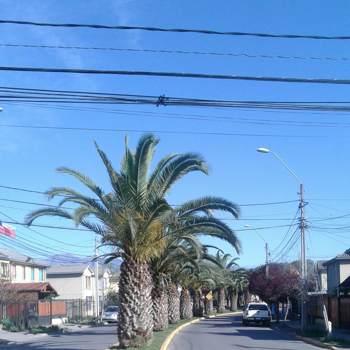 solito_1_Region Metropolitana De Santiago_Single_Male