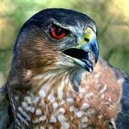 asifs063's profile photo