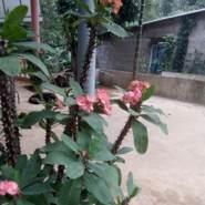 nhatanh24246's profile photo