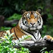 hakimw9's profile photo