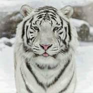 faisi786's profile photo