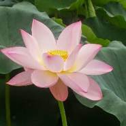 nhom357's profile photo