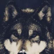 babayevr1's profile photo