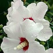 daniella432405's profile photo