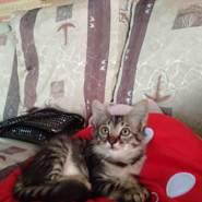 Chombi68's profile photo