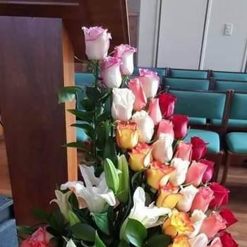 hello1356_Al Ahmadi_Svobodný(á)_Žena