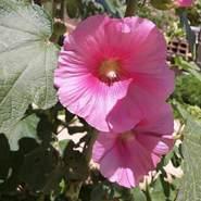 rachidar788's profile photo