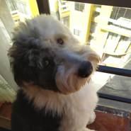 paolologico's profile photo