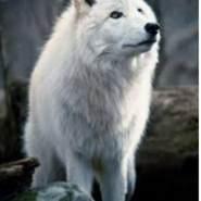 shawnan1's profile photo