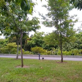 ksr391_Johor_Single_Male