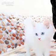 kalhwy4956's profile photo