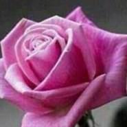 user_vbp41's profile photo