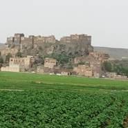 yemenis8's profile photo