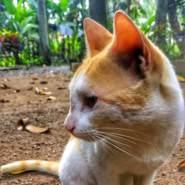 chikkuj's profile photo