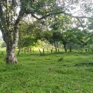 armandoa337's profile photo