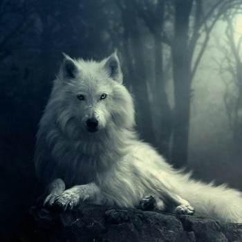 allisawolf_Tennessee_Single_Female
