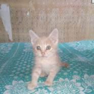 tvoyamaliska's profile photo
