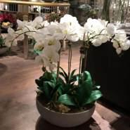 whiteorchids's profile photo