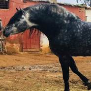 yassiney354's profile photo