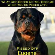 eugenec45's profile photo