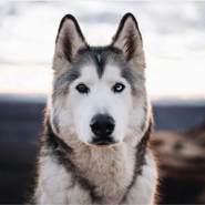 rovshan_1's profile photo
