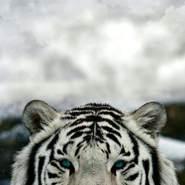 mouneh9's profile photo