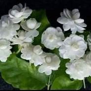 abokhalel005669's profile photo