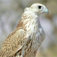 skr205's profile photo