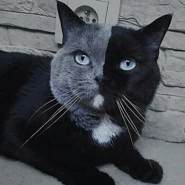 lamkhiet's profile photo