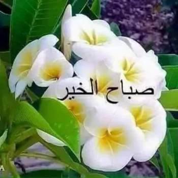 haslghs_Al Basrah_Single_Männlich