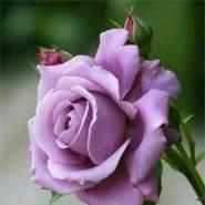 sharmilafathima01's profile photo