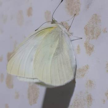 alihoda210_Noord-Holland_Single_Female