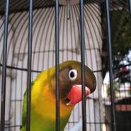 parjot6's profile photo