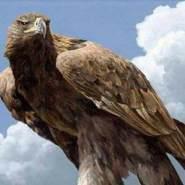 alnemera9's profile photo