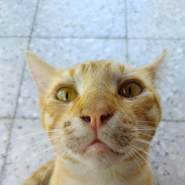 Omer1974's profile photo