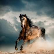 mahmouda653818's profile photo