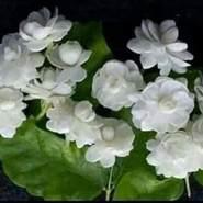 abokhalel00560's profile photo