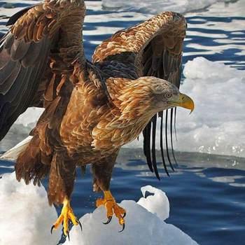 eagler989663_New York_أعزب_الذكر