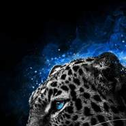 azdashera's profile photo