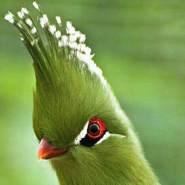 hamza916448's profile photo
