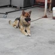 batakjib1's profile photo