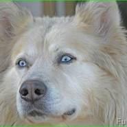 viorelm877988's profile photo
