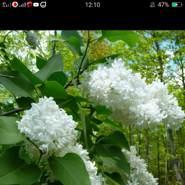 aminav7's profile photo