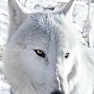 cesarg543's profile photo