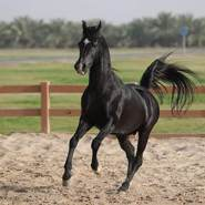 abdulk178422's profile photo